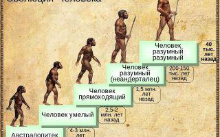 Эволюция человеческого общества от архантропов до человека разумного