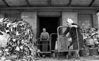 Застой в сельскохозяйственном производстве