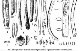 Собирательство в палеолите бассейна десны